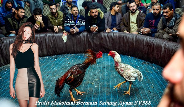Profit Maksimal Bermain Sabung Ayam SV388